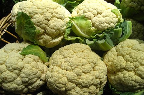 cauliflower for dogs top 10 healthy vegetables for dogs petguide
