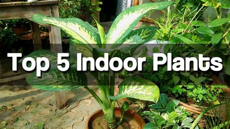 easy plants to grow indoors top 5 best indoor plants easy to grow indoor plants