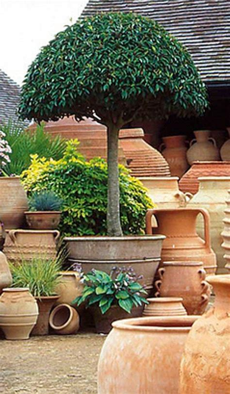 container gardening small patio spaces