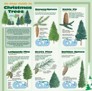 the science of christmas trees part 2 plant cell biology