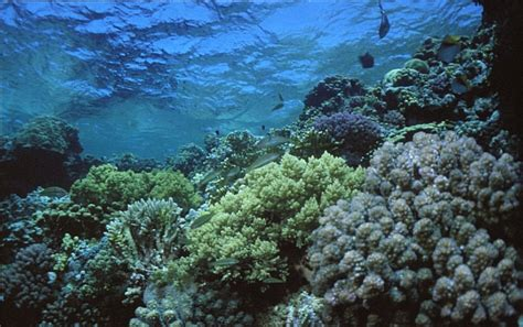 Sea Floor by Low Cost Fast And Accurate Sea Floor Monitoring And Mapping
