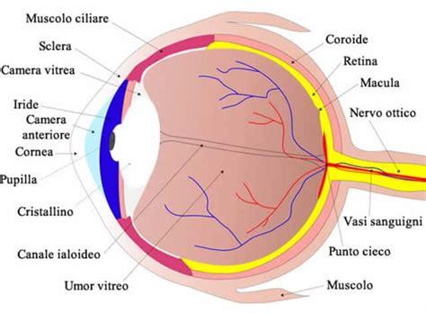 occhio interno sclera