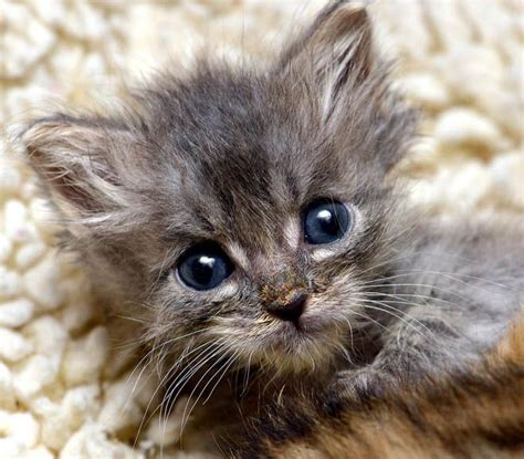 newborn kittens newborn kitten