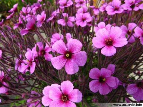 Plantes Et Jardins by Plantes M 233 Diterran 233 Ennes