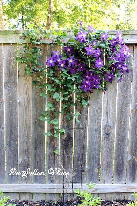 climbing fence plants how to plant a fence row garden gardens growing up and