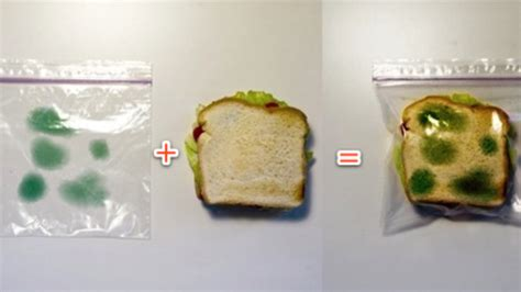 anti theft lunch bag deters sandwich thieves