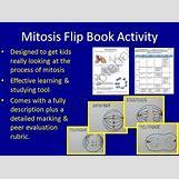 Mitosis Flip Book Printable | 550 x 410 jpeg 44kB