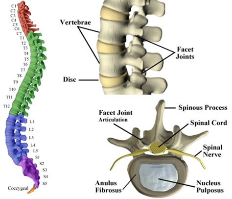 what are the sections of the spine chiropractic care ltd the spine support system for