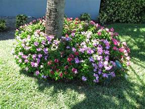 Plants In Water Vase Plants Amp Flowers 187 Catharanthus Roseus