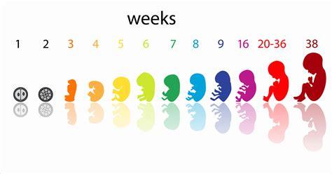 prenatal anses impuestos blog anses prenatal cobro 2016 new style for 2016 2017
