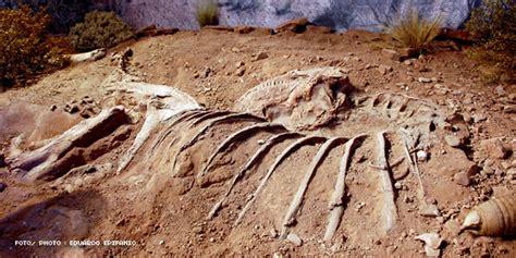 imagenes de fosiles f 243 siles de dinosaurios en argentina