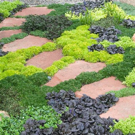 17 best images about ground cover ideas on