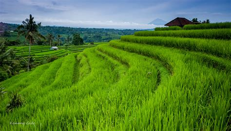 jatiluwih rice terraces bali indonesia jatiluwih rice