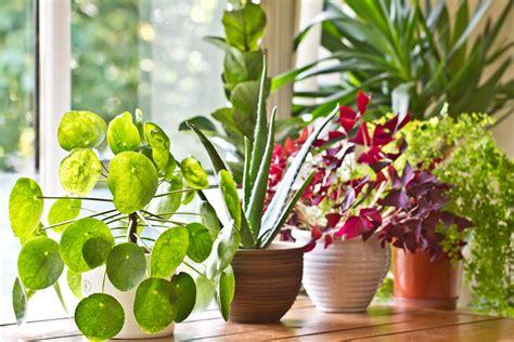 le piante d appartamento piante d appartamento le soluzioni in aprile e maggio