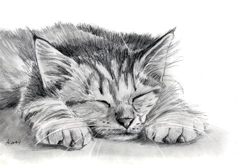 Kaos 3d Kucing Cat All Size tabby kitten pencil painting by it on deviantart