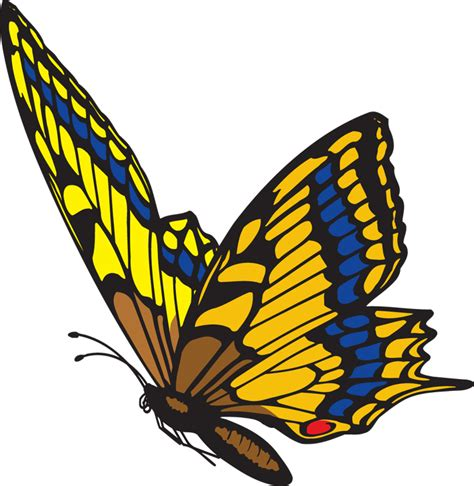 butterflies images image of butterflies cliparts co