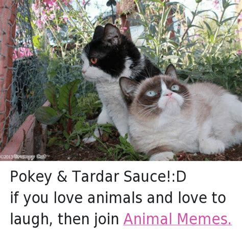 Tardar Sauce Meme - funny animals anime cats grumpy cat meme and memes of