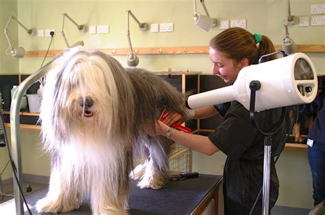 how much do groomers make how to find the best groomer