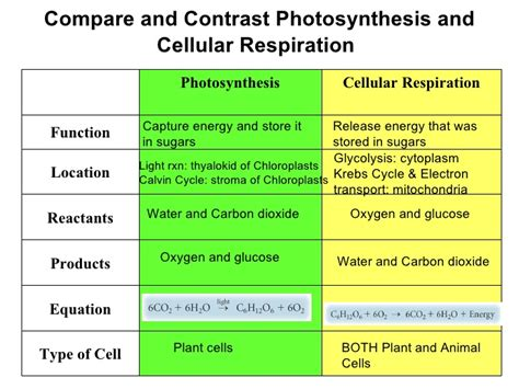 comparing photosynthesis and cellular respiration worksheet chapter 8 3
