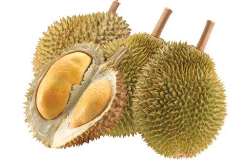 Bibit Durian Musang King Magelang Jawa Tengah bibit durian musang king magelang terpercaya acara
