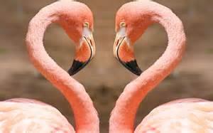 pink flamingos pink flamingos wallpapers pictures