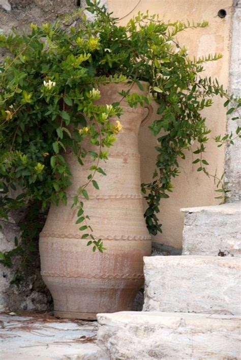 draping plants for pots terra cotta draping and pots on pinterest