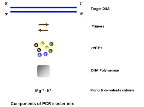 how much template dna for pcr biotech crunch pcr master mix