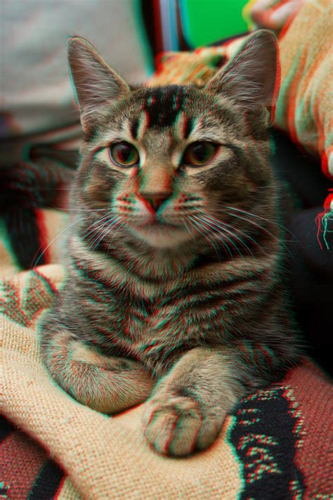3d Cat 3d anaglyph cat by districtaliens on deviantart