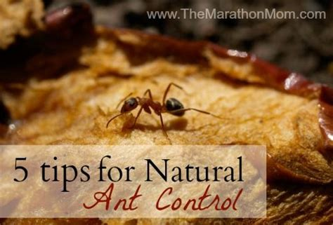 What Repels Ants In The Kitchen by 92 Best Images About Bugs Away On