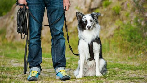 best way to housebreak a puppy best methods choosing the right way to your puppy the happy