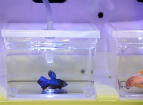 Rak Ikan Cupang kotak spesial cupang bebeja