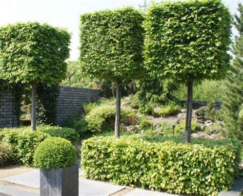 Blumenzwiebeln Kaufen 495 by Pflanzen Mit Motto Zinsser Gartengestaltung