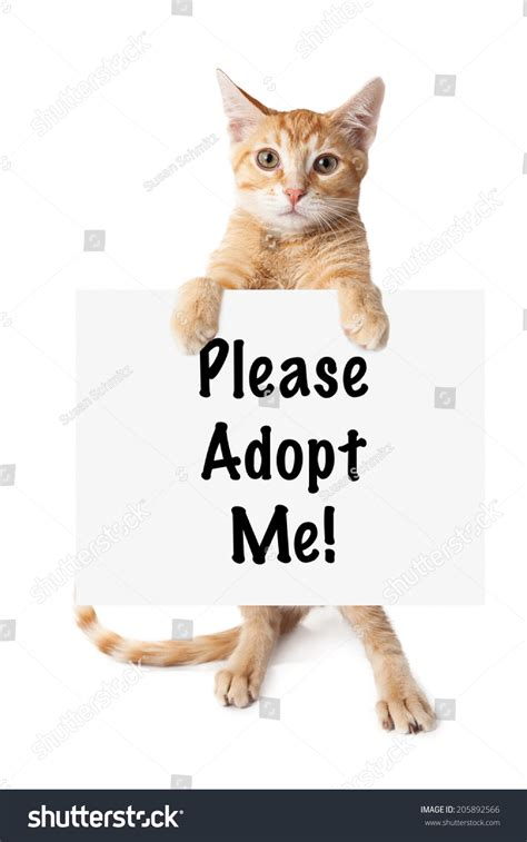 where to adopt a near me an orange kitten standing and holding a sign that says adopt me stock photo