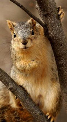 well the squirrels are back commercial script squirrel gif pinterest squirrel animal and chipmunks