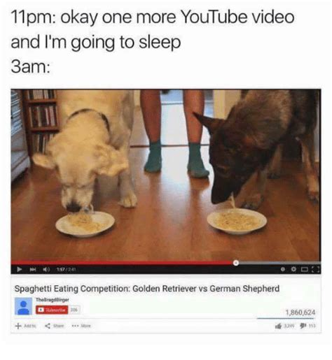 golden retriever vs german shepherd fight 25 best memes about german shepherd german shepherd memes