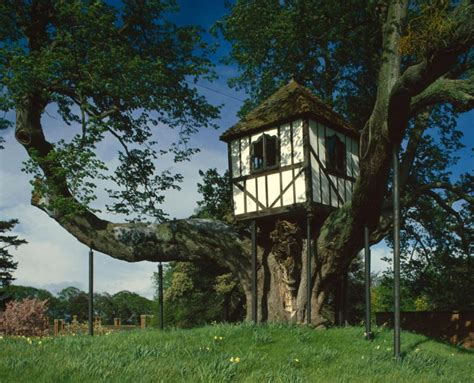 world s oldest house world s oldest treehouse in pitchford imbibes queen