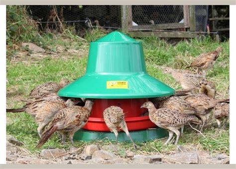 outdoor automatic feeder outdoor feeders