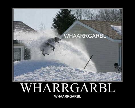 Dog Sprinkler Meme - wharrgarbl sprinkler dog know your meme