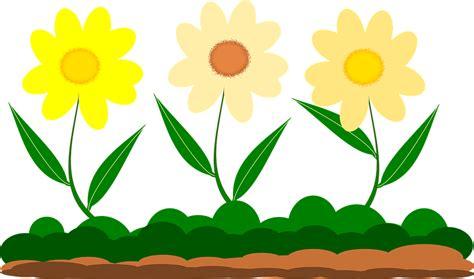 yellow garden flowers free vector graphic yellow flower vector image garden