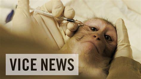 experimenting  animals   monkey lab youtube