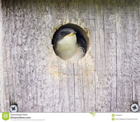 bird in the house baby bird in a bird house stock image image of hole 46489941