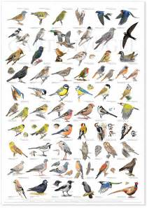 The Great Big Home And Garden Show by Pics For Gt Birds With Names In English