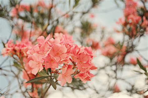 lovely like blossom cute gt beautiful blossom cute flower image 495184 on favim com