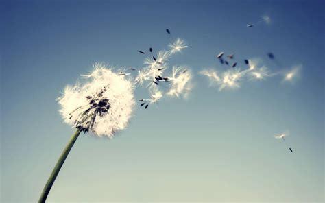 imagenes de otoño en sepia onda encantada del viento silencio el lamento no