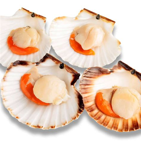 Cuisine Coquille St Jacques