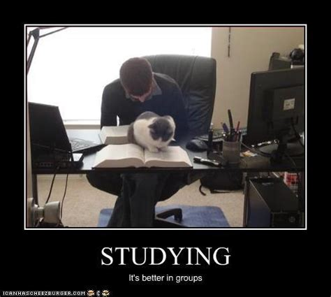 Studying Meme - 26 best study meme s images on pinterest funny stuff