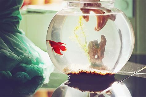 fish tank in bedroom feng shui is an aquarium in the bedroom considered bad feng shui