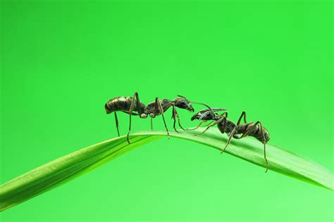how to get rid of ants in your house how to get rid of ants in your kitchen
