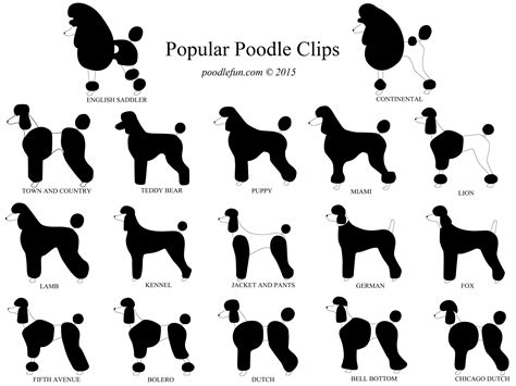 different types of poodle cuts modified continental clip google search cool stuff