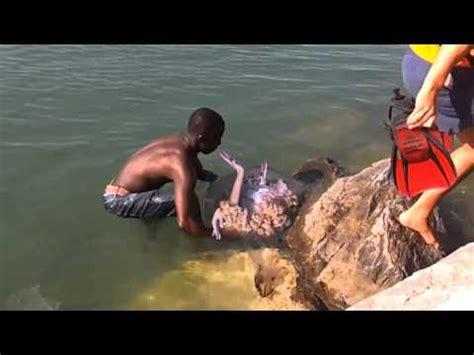 imagenes o videos de sirenas reales full download sirena muerta encontrada en playa de mexico